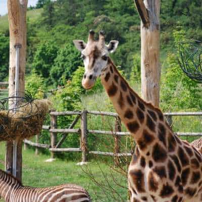 Prague Zoo – an unconventional sightseeing day in the 4th best Zoological garden in the world